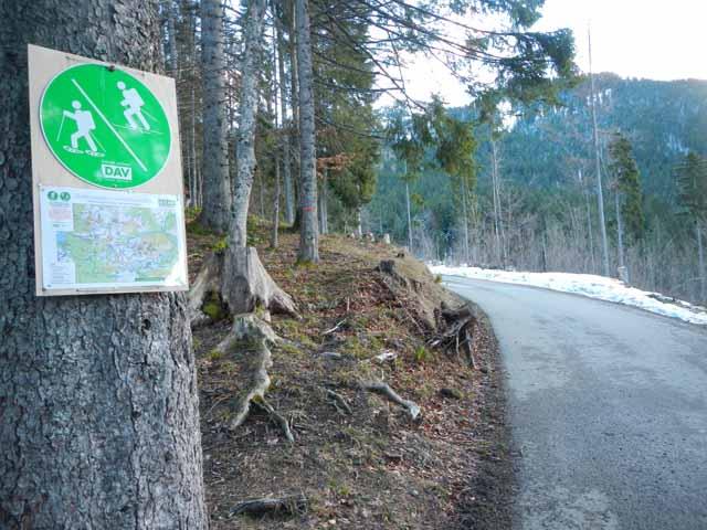 Forststrasse ohne Schnee