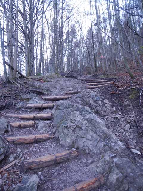 Jochberg_Aufstieg_Stufen-im-Wald