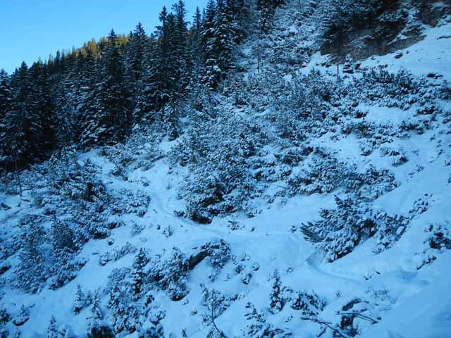 Schöttelkarspitze verschneite Waldflanke