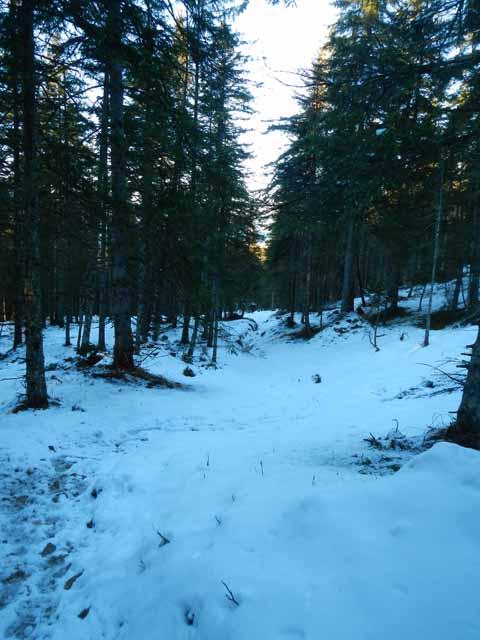 Schöttelkarspitze Abstieg durch den Wald