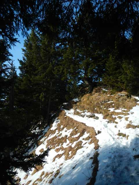 Teufelstättkopf schwieriger Aufstiegspfad durch den Wald